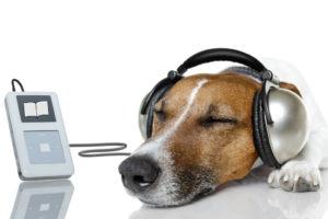 オーディオブックを聞く犬