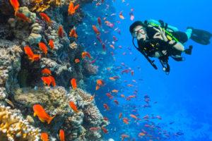 秋ダイビング_海中を泳ぐ女性
